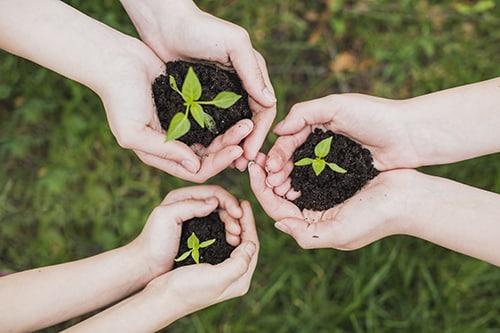 környezettudatos, újrahasznosítás, környezetvédelem, kéz, növény